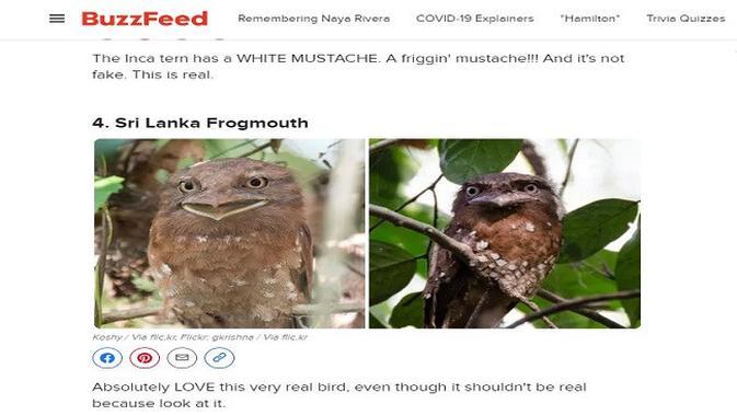 Gambar Tangkapan Layar Artikel dari Situs buzzfeed.com