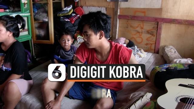 Seorang korban banjir di Kedoya Selatan, Kebon Jeruk, Jakarta Barat digigit ular kobra ketika kediamannya diterjang banjir.