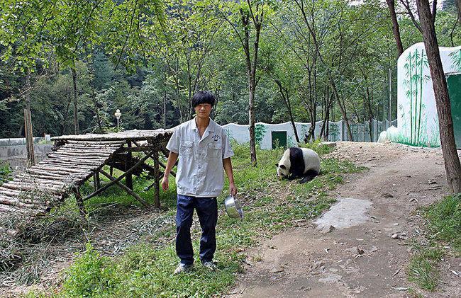 Seorang pawang panda yang terbiasa memberi makan dan merawat Qizai | Photo: Copyright boredpanda.com