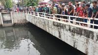 Kawanan buaya terlihat di Kali Grogol, Jakarta Barat. (Merdeka.com/Ronald)