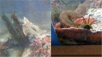 Tidak disangka, suatu monster sepanjang 1,2 meter keluar dari sela-sela bebatuan dalam akuarium. (Sumber gurutek)