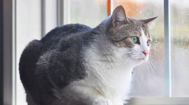 Ekor Kucing