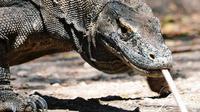 Pembangunan wisata di Taman Nasional Komodo klaim sesuai kaidah konservasi. (Foto: Instagram)