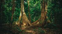 Cagar Alam Tangkoko di Bitung, Sulawesi Utara (Dok. Pemkot Bitung/Komarudin)