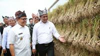 Menteri Pertanian Andi Amran Sulaiman melakukan panen perdana bawang putih di Banyuwangi, Kamis (22/3/2018).