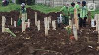 Petugas merapikan area makam jenazah dengan protokol COVID-19 di TPU Srengseng Sawah, Jakarta, Kamis (21/1/2021). Sebagian lahan TPU Srengseng Sawah dijadikan pemakaman jenazah Covid-19 sejak Selasa (12/1) lalu, dengan kapasitas 564 petak makam kini nyaris penuh. (Liputan6.com/Helmi Fithriansyah)
