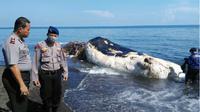 Kondisi Paus yang mati terdampar di pantai Buleleng, Bali, Senin (19/3/2018).