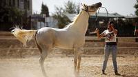Ilustrasi kuda (AFP)