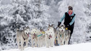 Seorang musher mengendarai kereta luncur anjing tradisional pada lomba Sedivackuv Long di dekat Desa Destne v Orlickych Horach, Republik Ceko, Kamis (23/1/2020). Sedivackuv Long edisi ke-24 tahun ini berlangsung selama lima hari. (AP Photo/Petr David Josek)