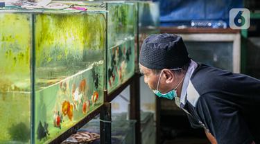 Warga melihat koleksi ikan hias yang dijual pedagang di Sentra Ikan Hias di Jalan Sumenep, Menteng, Jakarta, Sabtu (18/7/2020). Sentra ikan tersebut biasanya ramai dikunjungi warga setiap akhir pekan. (Liputan6.com/Faizal Fanani)
