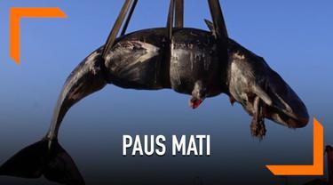 Seekor paus sperma ditemukan mati di pinggir pantai Italia. Dari dalam perutnya ditemukan 22 Kg sampah plastik.