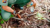 Personel BBKSDA Riau mengecek jejak diduga milik Harimau Sumatra yang belakangan diketahui milik satwa tapir. (Liputan6.com/Dok BBKSDA Riau/M Syukur)