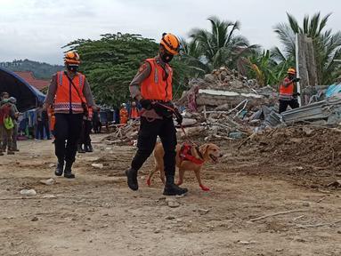 Anjing polisi K-9 diterjunkan saat proses pencarian korban gempa di reruntuhan bangunan Rumah Sakit Mitra Manakarra di Mamuju, Minggu (17/1/2021). Polri mengerahkan enam ekor K-9 untuk membantu menangani dampak gempa bumi di Majene dan Mamuju, Sulawesi Barat. (Liputan6.com/Abdul Rajab Umar)