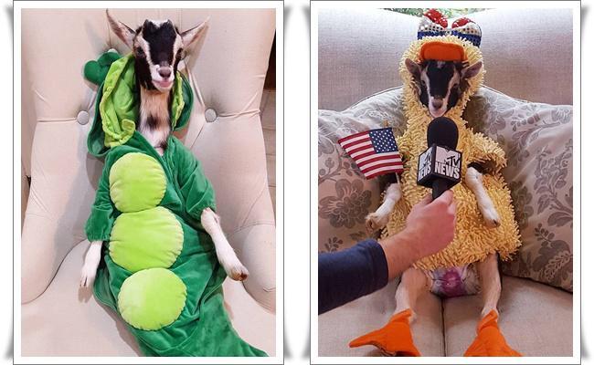 Polly yang mengenakan kostum hewan   Photo: Copyright metro.co.uk