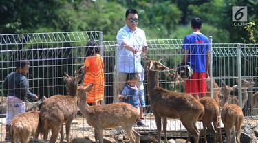 Pengunjung memberi makan rusa Jawa di penangkaran yang terletak di pintu masuk Perumahan BNR, Bogor, Jawa Barat, (19/6). Penangkaran yang awalnya terdiri dari empat rusa ini kini berkembang menjadi 40 rusa. (Merdeka.com/Arie Basuki)