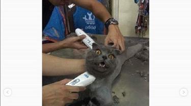 Aksi kucing ngambek ini jadi viral (foto: @omgindonesia.id)
