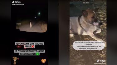 Kisah Anjing Setia yang Antar Peziarah ke Makam Pemiliknya, Bikin Haru