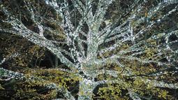 """Pengunjung melihat pohon yang diterangi lampu-lampu untuk acara  """"Christmas at Kew Gardens"""" di Kebun Botani Kew, London, 21 November 2018. Momen langka ini mulai dibuka untuk publik dimulai pada 22 November 2018 hingga 5 Januari 2019. (AP /Frank Augstein)"""