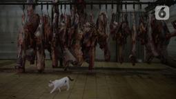 Seekor kucing terlihat di Rumah Pemotongan Hewan (RPH) Dharma Jaya, Jakarta, Rabu (21/7/2021). Pemotongan hewan qurban saat pandemi sekarang  ini mengalami kenaikan sekitar 30 persen penerimaan hewan kurban pada Idul Adha 1442 H. (merdeka.com/Imam Buhori)