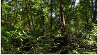 Kawasan Hutan Mangrove di Taman Nasional Sembilang, Musi Banyuasin, Sumatera Selatan. (dok. Ridwan Pambudi/tnberbaksembilang.com)