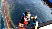 Ervan asyik snorkeling bersama hiu sirip hitam di Bangsring Banyuwangi, Jawa Timur. (Liputan6.com/Fitri Haryanti Harsono)