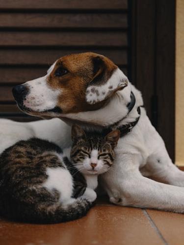 Ilustrasi anjing dan kucing