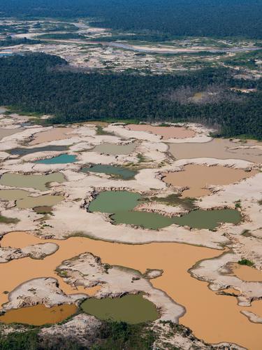 Kerusakan Hutan Amazon Akibat Penambangan Ilegal