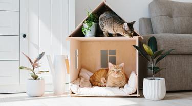 Bukan Hanya Kandang Kucing Lucu, Keamanannya Wajib Jadi Prioritas