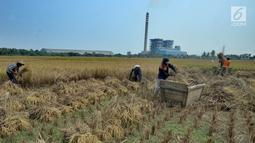 Suasana saat para petani memanen padi di sawah yang terletak di belakang PLTU Labuan, Pandeglang, Banten, Minggu (4/8/2019). Musim kemarau menyebabkan harga gabah di tingkat petani mengalami kenaikan dari Rp 3.600 menjdi Rp 4.300 per kilogram. (merdeka.com/Arie Basuki)