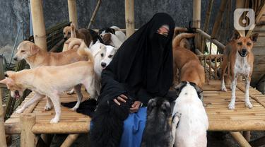 Pecinta hewan Hesti Sutrisno bermain dengan anjing-anjing liar peliharaannya di rumah penampungan sementara Green House, Tenjolaya, Bogor, Jawa Barat, Minggu (14/3/2021). Hingga kini, Hesti telah menampung 70 ekor anjing liar. (merdeka.com/Arie Basuki)