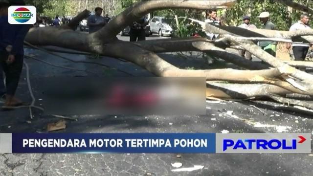 Seorang pengendara sepeda motor tewas, dan satu korban lainnya kritis akibat tertimpa pohon tumbang saat melintas di jalur pantura Hutan Baluran, Situbondo, Jawa Timur.