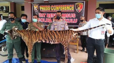 Populasi Harimau Sumatera Semakin Mengkhawatirkan