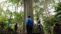 Sejumlah jurnalis melihat pohon Leda di objek wisata alam Telaga Tambing yang jadi objek vandalisme yang merusak keindahan pohon endemik TN Lore Lindu itu. Minggu (15/11/2020). (Foto: Liputan6.com/ Heri Susanto).
