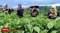 Sejumlah pengunjung di Kebun Teh Tiris, Kabupaten Probolinggo (Times Indonesia/Dicko W)