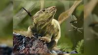 Rekaan bentuk reptil cynodont yang berbentuk mirip mamalia. (Sumber Jorge Blanco)
