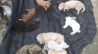 Hewan-hewan malang itu diduga berasal dari peternakan di Provinsi Anhui, di mana pelanggan dapat memesan hewan peliharaan secara online dan mengirimkannya ke rumah mereka secara nasiona. (weibo)