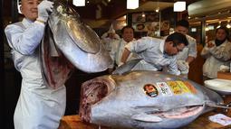 Pekerja restoran susi ternama Jepang memotong ikan tuna sirip biru seberat 278 kg di restoran mereka, Tokyo, Sabtu (5/1). Ikan tuna raksasa itu telah memecahkan rekor penjualan tertinggi, dengan dibeli seharga $ 3,1 juta (Rp43,4 miliar). (Kazuhiro NOGI/AF