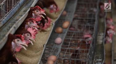 Peternak di Depok Ungkap Penyebab Tingginya Harga Telur Ayam