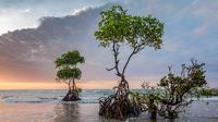 Hutan Mangrove  (sumber: Pixabay)