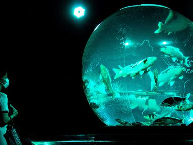"""Seorang perempuan melihat ikan mas koki nishiki-goi dalam akuarium pajangan bertajuk """"Earth Aquarium"""" selama pratinjau pers pameran Art Aquarium 2020 di Tokyo, Jepang, Kamis (27/8/2020). Art Aquarium kini menampilkan 30 ribu ikan mas yang ditempatkan di tangki-tangki besar. (Behrouz MEHRI / AFP)"""
