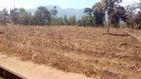 Nampak berapa lahan pertanian di sekitar Sukahurip, Garut mulai mengering akibat kemarau (Liputan6.com/Jayadi Supriadin)