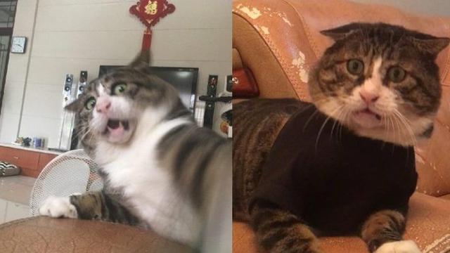 Unduh 97+  Gambar Kucing Lucu Menjulurkan Lidah Paling Baru