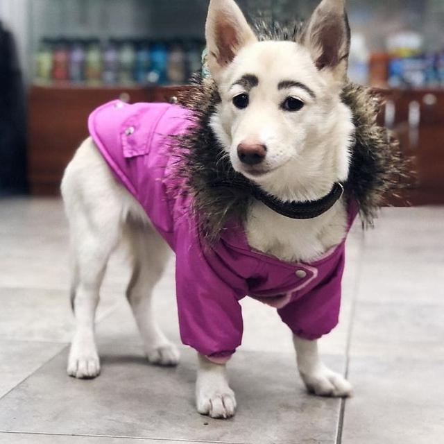 anjing memiliki alis