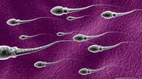 Ilustrasi Sperma (Istimewa)