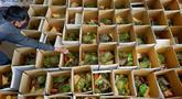 Pekerja kelompok amal Alkhidmat Foundation Pakistan menyiapkan kotak bahan makanan untuk dibagikan gratis kepada warga yang membutuhkan jelang bulan suci Ramadan di Islamabad, Pakistan, Minggu (11/4/2021). Ramadan tahun ini masih berlangsung di tengah pandemi COVID-19. (AP Photo/Anjum Naveed)