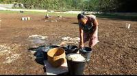 Air Telaga Banteng di Gunungkidul sudah dua bulan mengering setelah hujan tak turun-turun. (Liputan6.com/Yanuar H)
