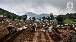 Sejumlah petani menyiapkan lahan untuk ditanami kentang di Desa Sembungan, Dieng, Jawa Tengah, 1 Juli 2021. Hampir 90 persen lahan pertanian di kawasan Dieng ditanami kentang oleh masyarakat setempat. (merdeka.com/Iqbal S. Nugroho)