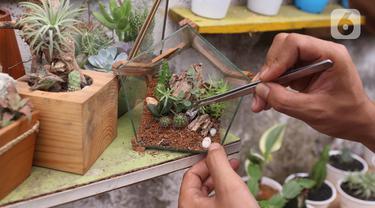 Pembudidaya tanaman hias merawat kaktus di Rumah Kaktus, Kota Tangerang, Banten, Jumat (2/4/2021). Berbagai tanaman seperti kaktus dan sukulen di tempat ini dijual dengan harga Rp 10 ribu hingga jutaan rupiah tergantung jenis dan ukuran. (Liputan6.com/Angga Yuniar)