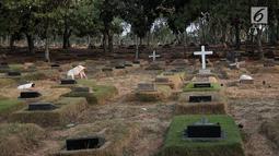 Sejumlah kambing mencari makan di antara makam yang berada di TPU Pondok Rangon, Jakarta, Sabtu (10/8/2019). Kambing tersebut sengaja digembalakan di area kuburan oleh pemiliknya lantaran kurangnya lahan hijau di daerah perkotaan. (Liputan6.com/Faizal Fanani)
