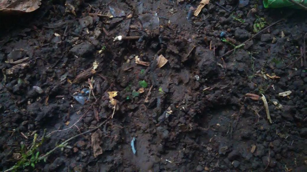 Pergerakan macan kumbang itu begitu cepat sehingga hasil rekaman di kawasan Semeru tak begitu jelas. (Liputan6.com/Dian Kurniawan)